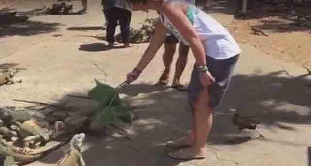 Eifersüchtige Ente attackiert diese Frau während sie Chamäleons füttert