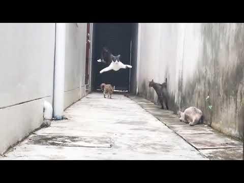 Krasser Katzen RUN