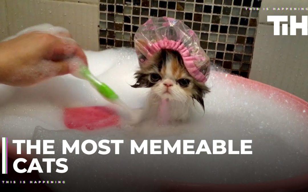 Katzen sind schon echt lustig