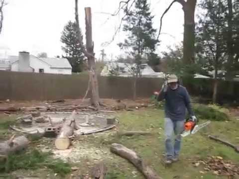 Baum stellt sich wieder auf